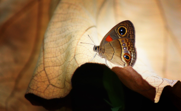 On Nature's Spotlight