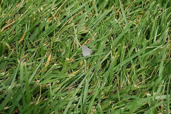 Grass by JustineSaldana