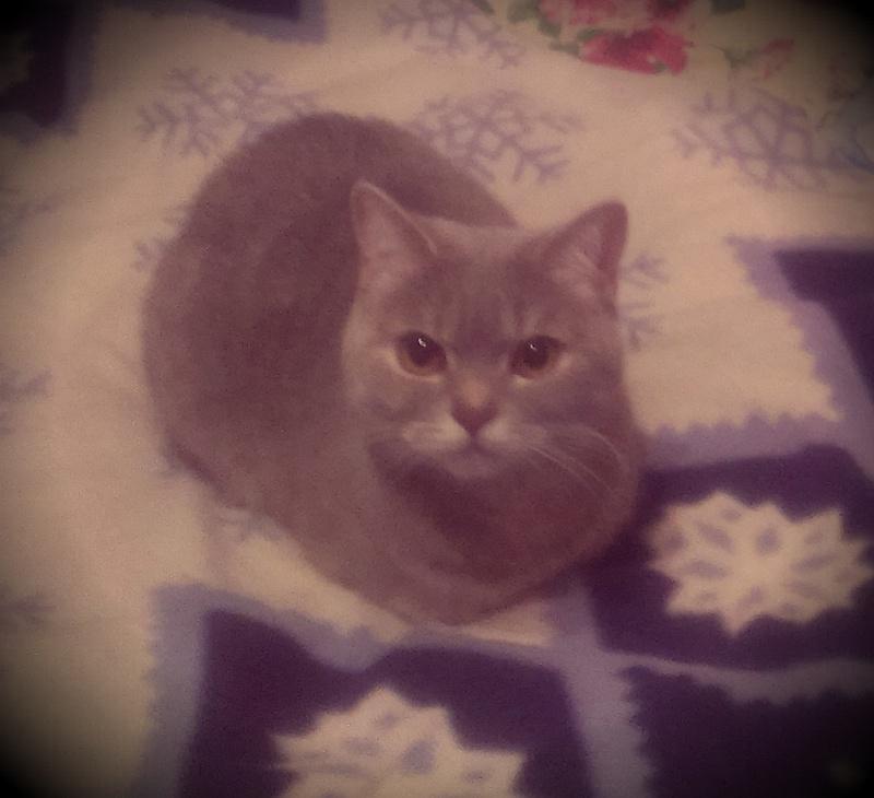 кошка-торпеда