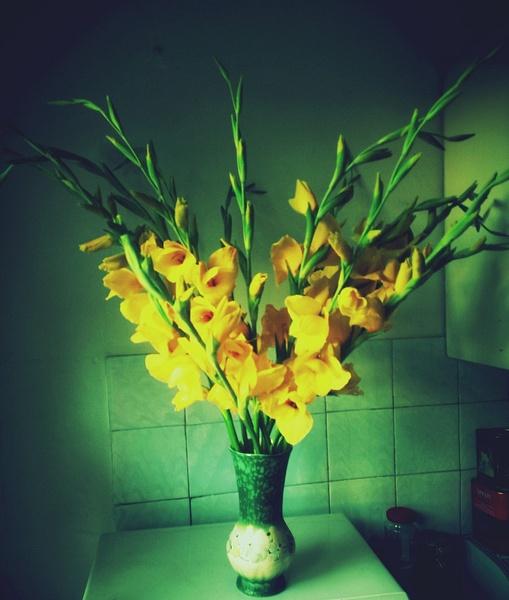Sword lilies by Naj Naj