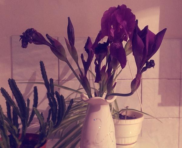Iris by Naj Naj