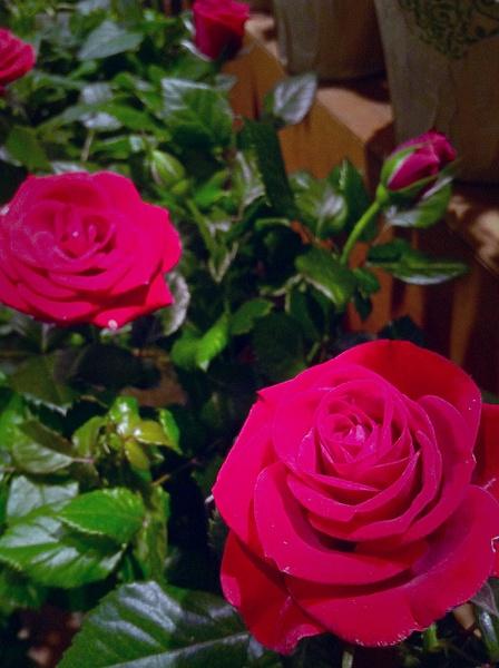 LOVE by PenelopeAlmaguer