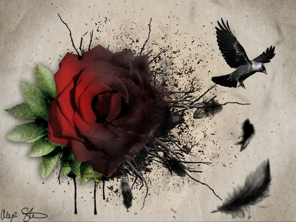 Raven and a Rose