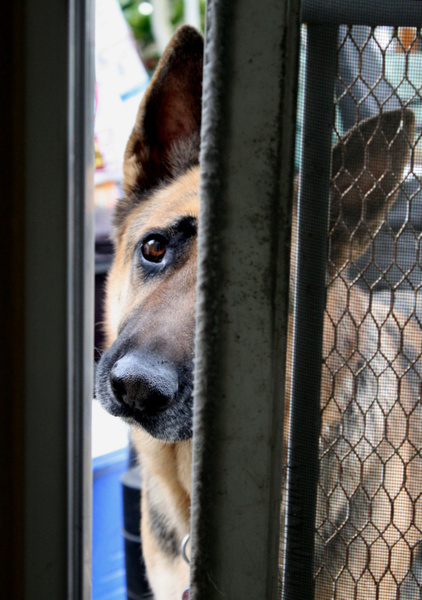 Please Let Me In. . .