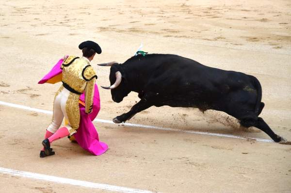 Bull fighting in Madrid 1