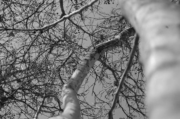 Treee by Jamie42