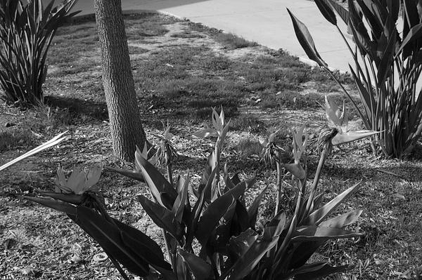 Flowers 2 by Jamie42