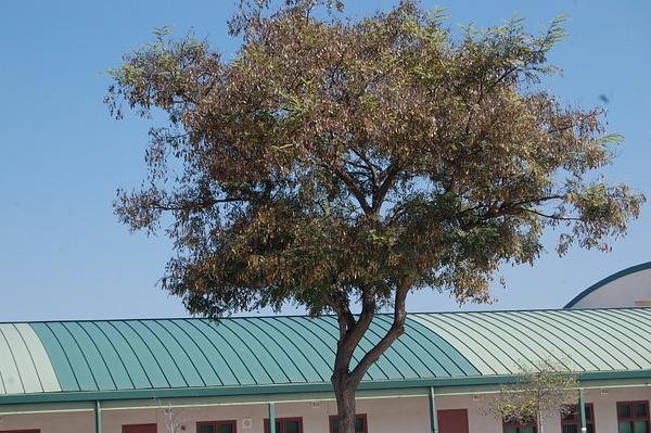 tree by Jamie42