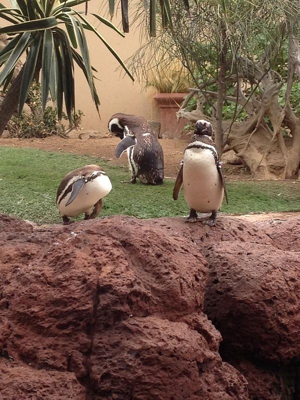 Average Seaworld Penguins