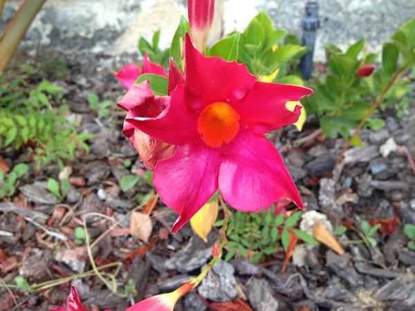 Bright Pink Flower by RyanAvelino