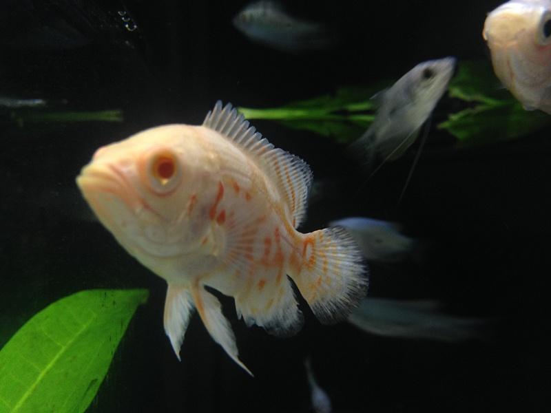 Stores Pet Fish