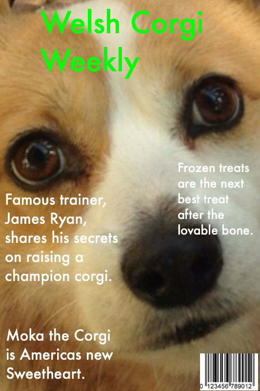 Welsh Corgi Weekly