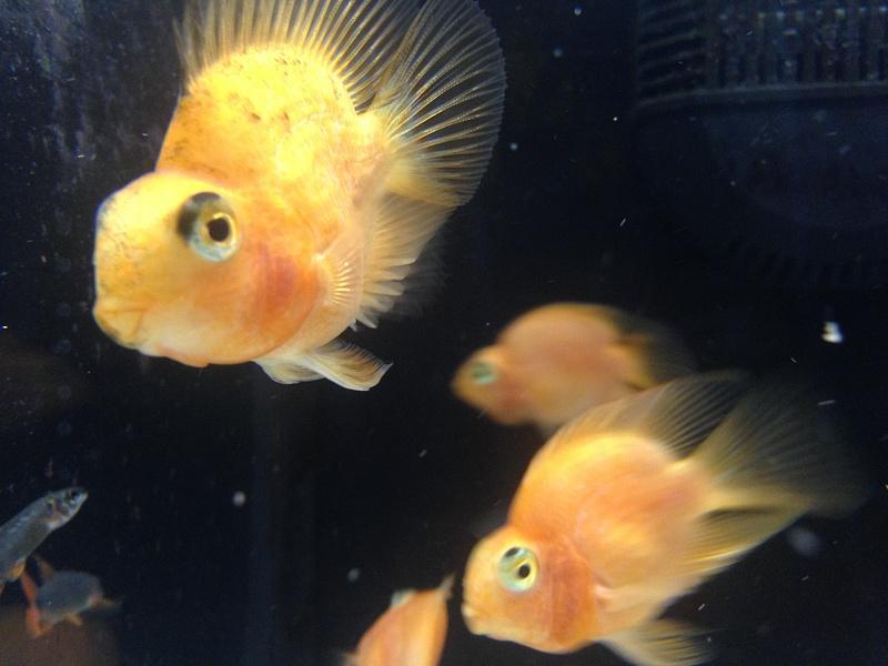 Friend's Fish Pets