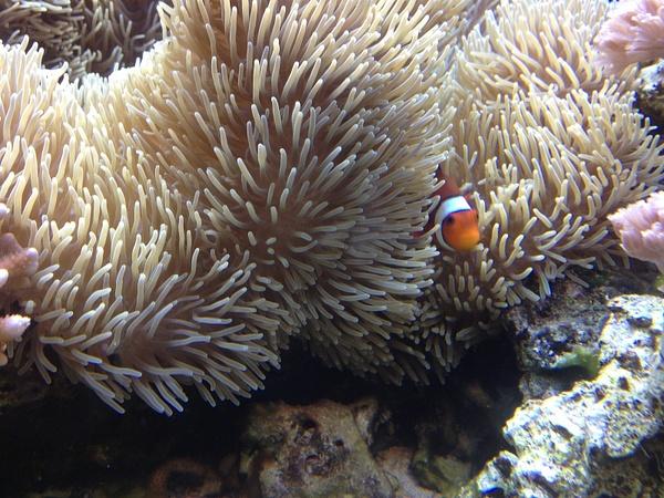 Found Nemo by SalvadorVicentebanuelos