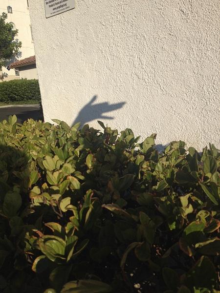 iPhone photo SP_8733517 by SalvadorVicentebanuelos