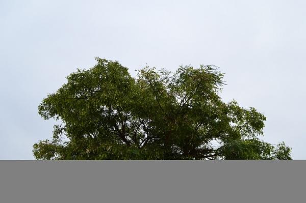 Lone Tree by SalvadorVicentebanuelos