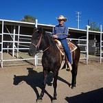 Mustangs/ horses