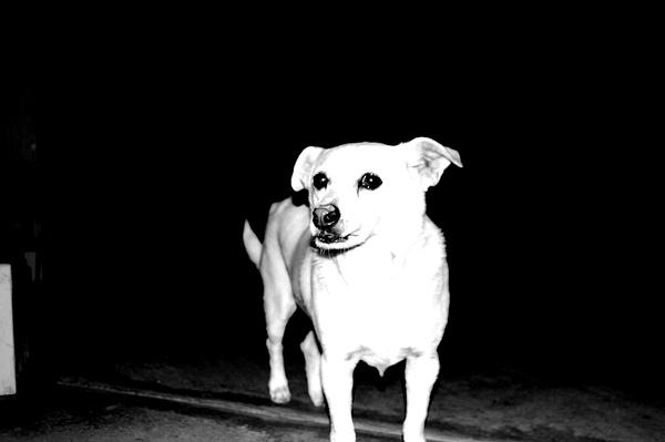 Week 4: Black and White by AustinE5