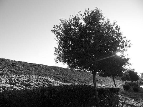 Week 8 _ Light and Shadow by PamelaS5