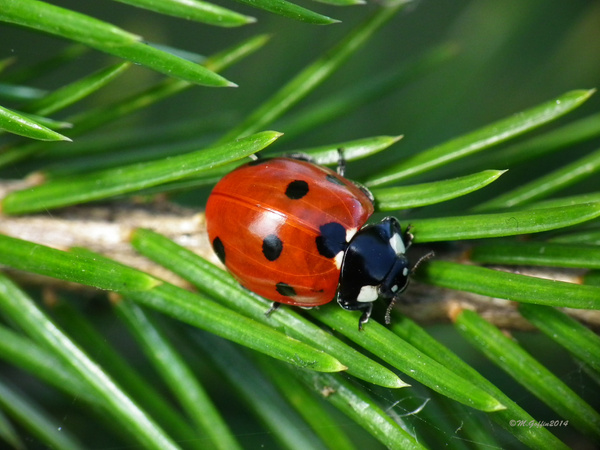 LadyBird by MikeGoffin