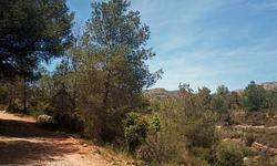 2015 05 10_Coves de San Ferrerrìs