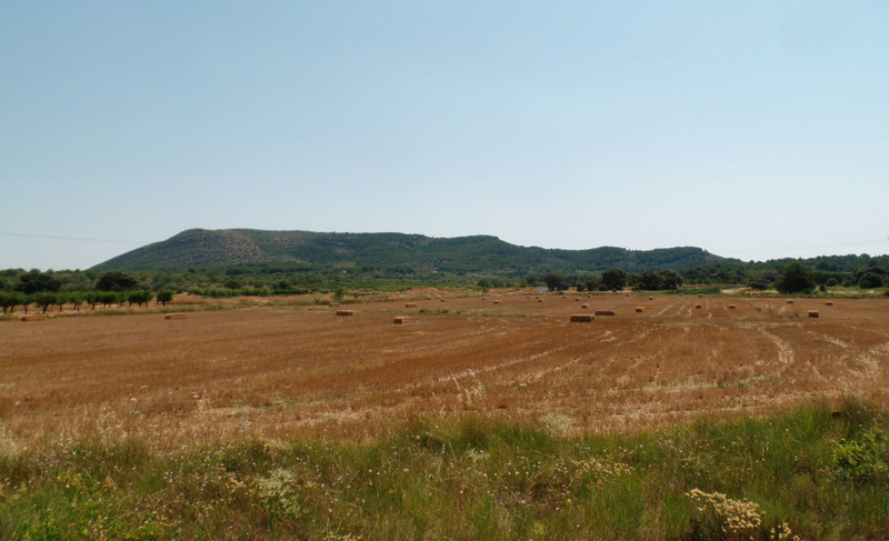 fields are harvested