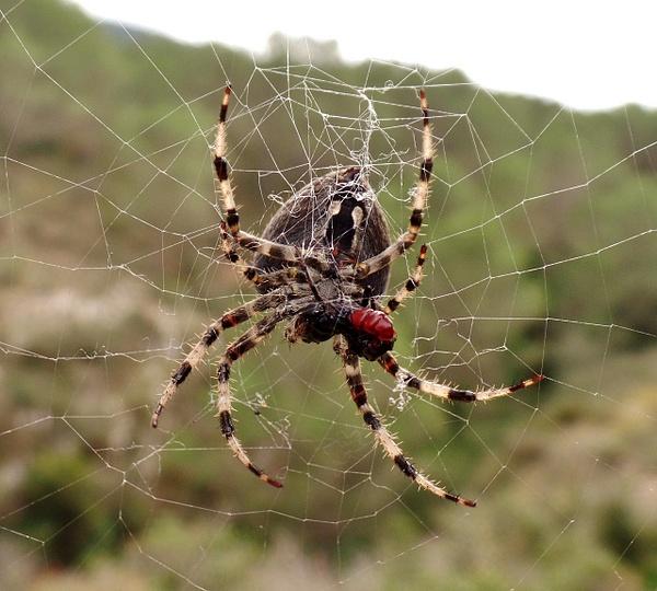 Spider having lunch by Henner Stollberg