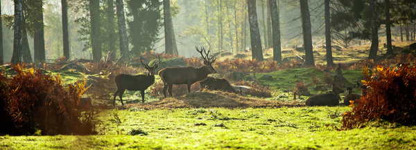 Why I took up photography and Red deer photos by...