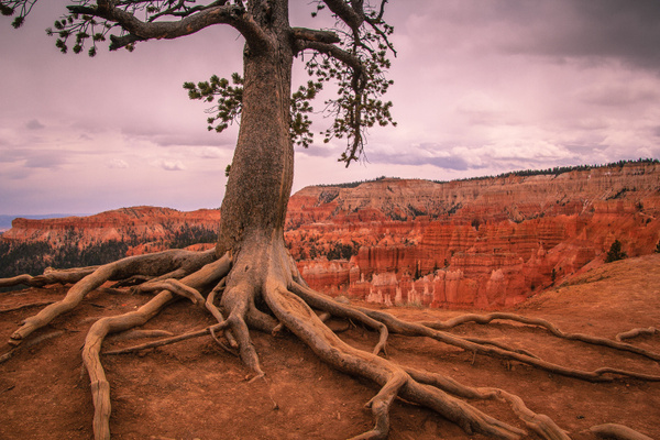 Bryce at Sunset by CathyDonohoue
