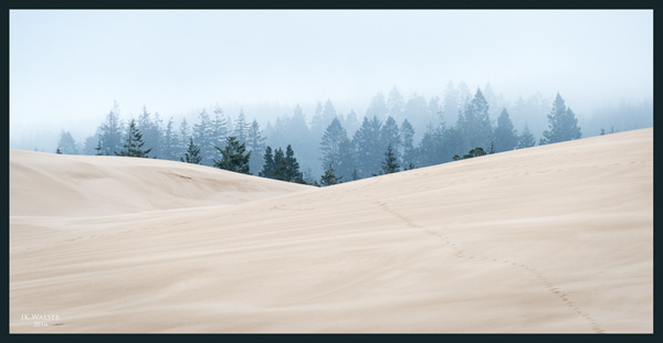 Foggy Morning in the Dunes