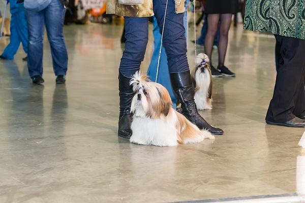 Dog Show-2014 nov, 8 by MaxMaximov