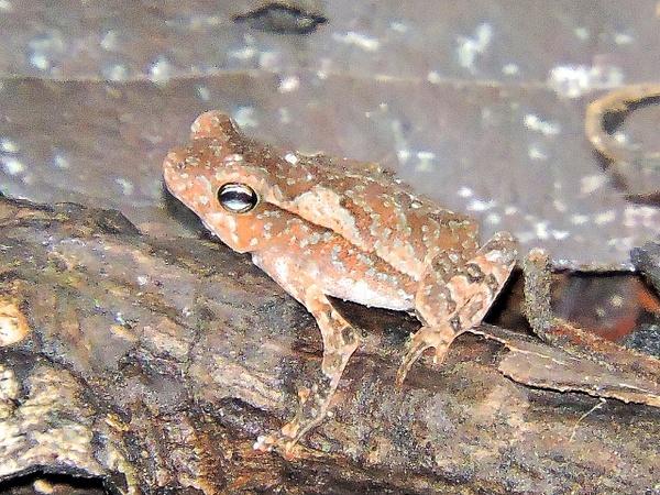 Tiny frog by Clark Johnston
