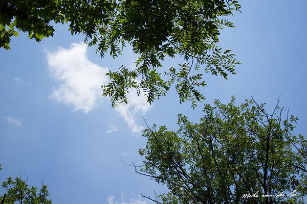 Mike van der Lee_Kitap Ağacı, Kurtuluş Parkı, Pazar 22-06-14_36 by Mike van der Lee
