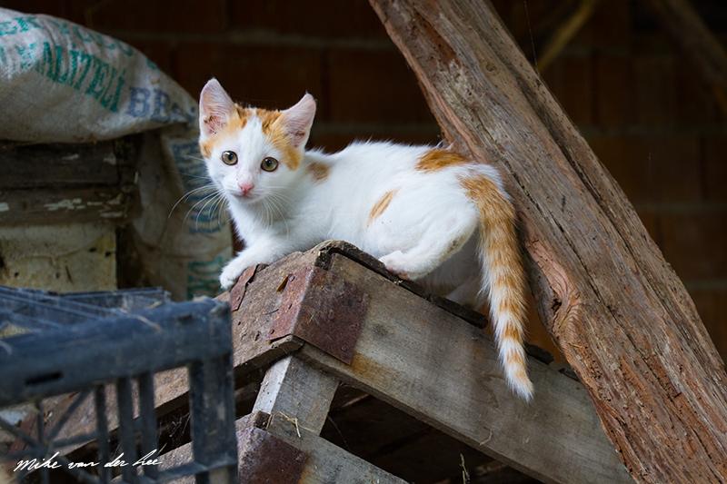 Kittens playground