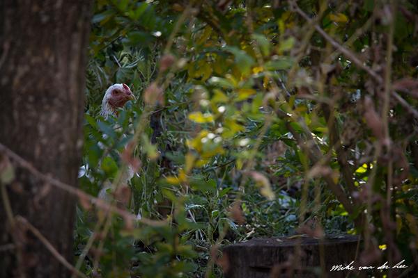 Peekin' through by Mike van der Lee
