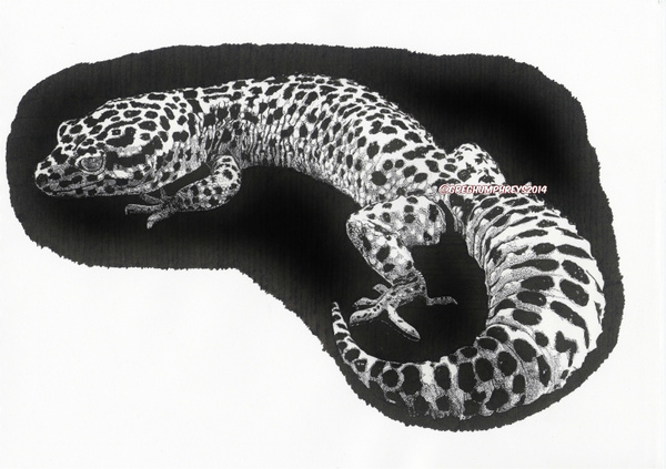 Leopard Gecko by GregoryHumphreys