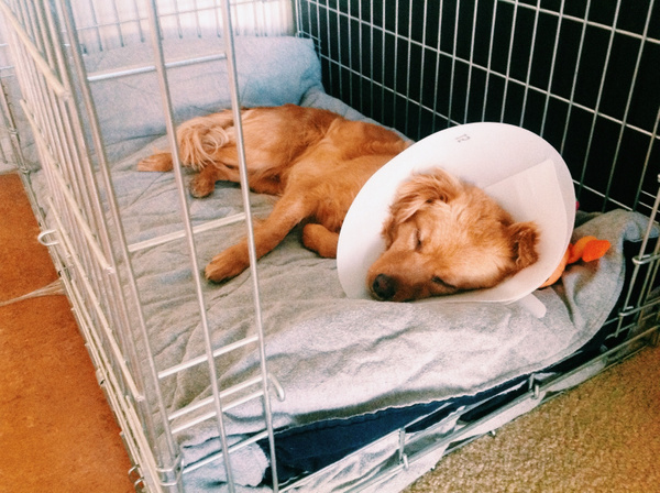 Home and pooped from surgery by Carl Esperance