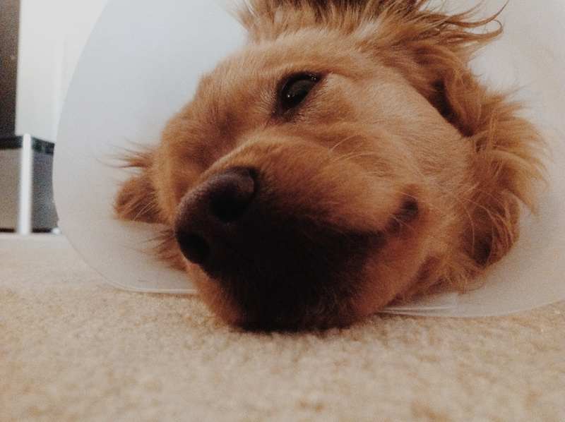 This cone has defeated me