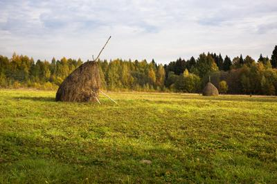 Кологривский Лес 27-09-2014