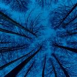 Album-2014-Nature