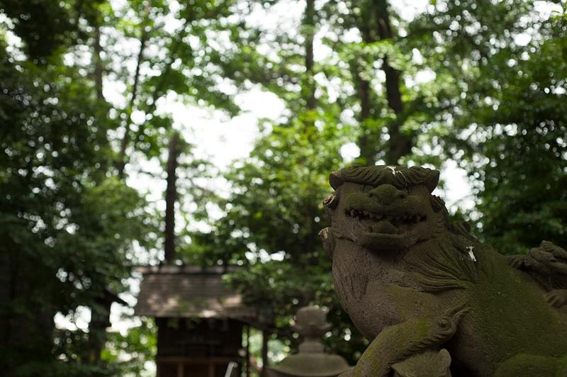 Dog in the shrine