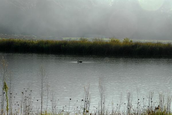 Misty Morning by Photogenics