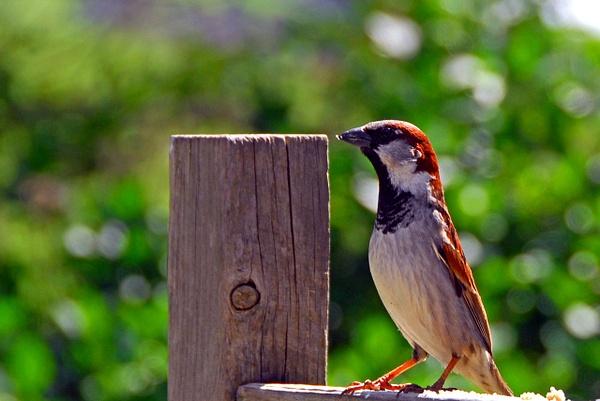 The Sparrow by Photogenics