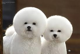 Bill Iles and buddy showing their new afro haircuts...