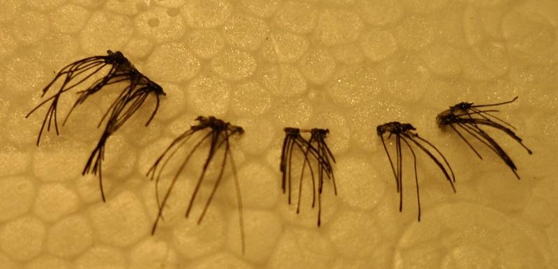 false-lashes-cut
