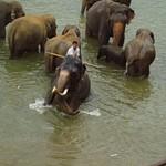 Lanka 2005-3
