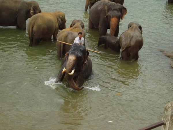 Lanka 2005-3 by RodBoakes