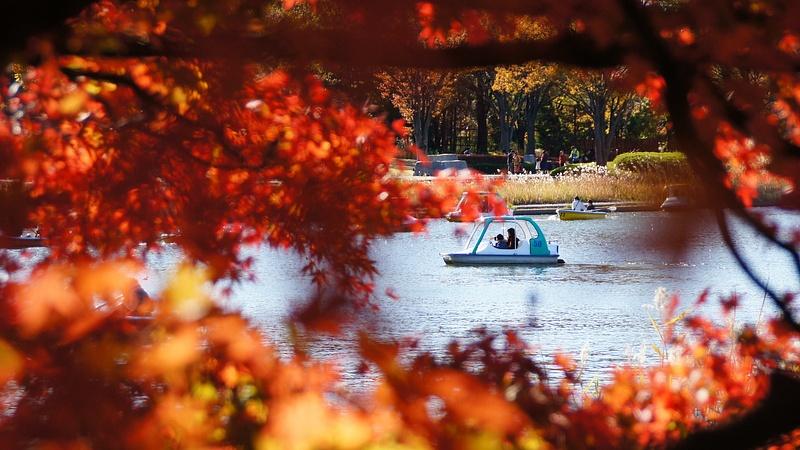 A nice autumn afternoon - Tokyo
