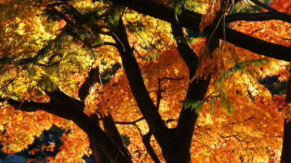 Autumn colors - Tokyo area by luis0093