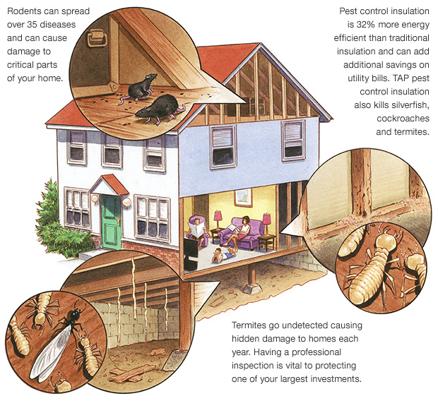 Pacific Coast Termite Services